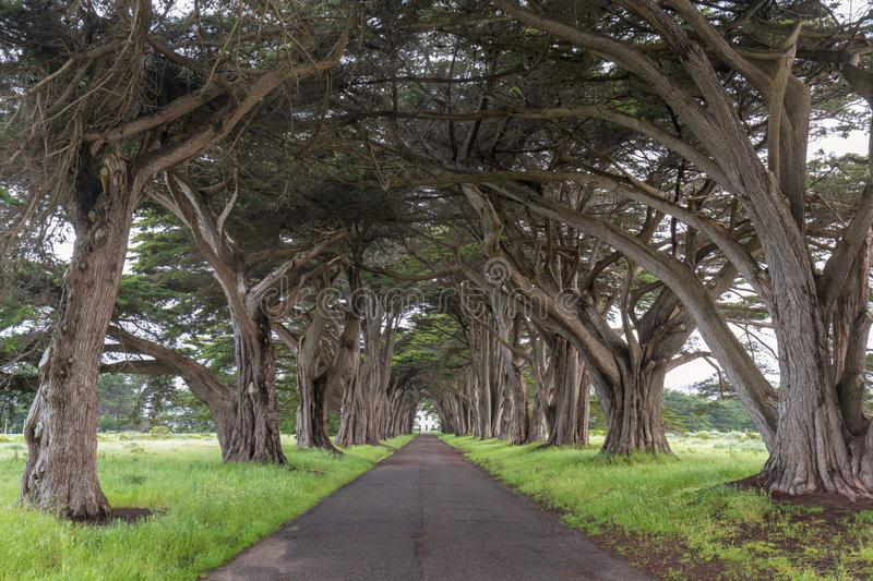 Stunning Cypress Tree Tunnel at Point Reyes National Seashore, California, United States. Fairytale trees in the beautiful day stock photos