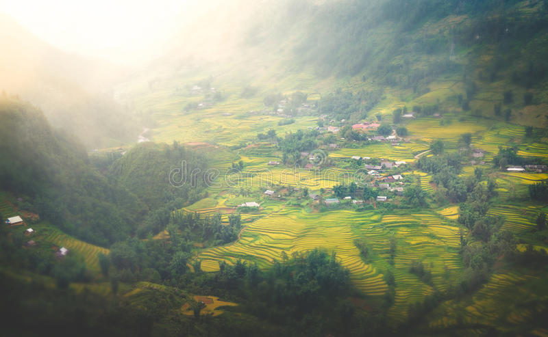 Stunning Dunset over The Beautiful Rice Field in Vietnam stock images