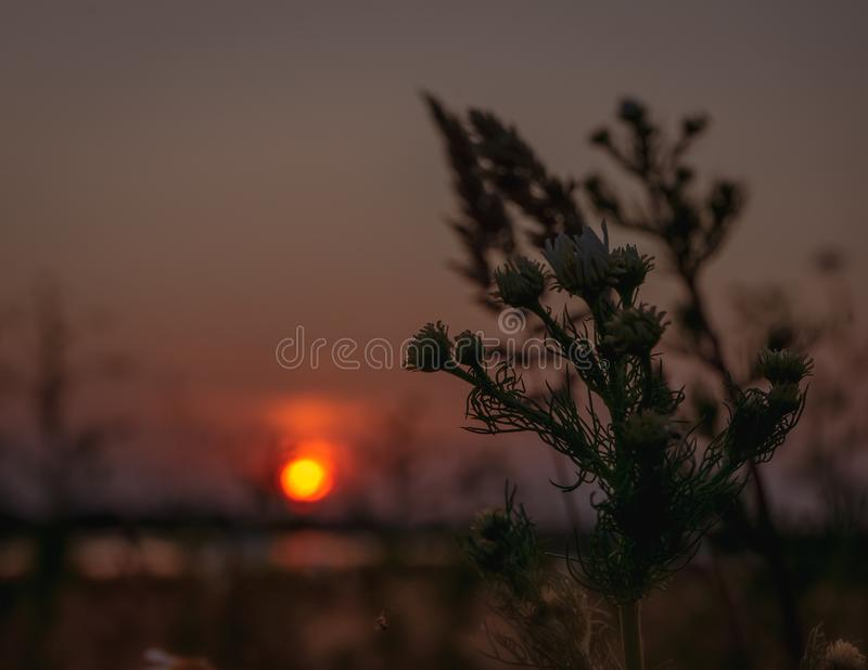 Stunning evening panorama of sun setting over the field royalty free stock image