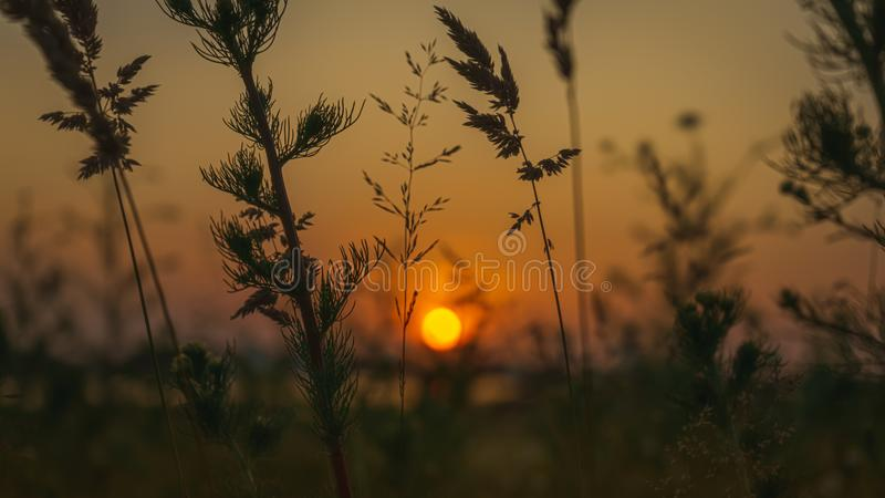 Fantastic evening landscape of sunset in the field royalty free stock photo