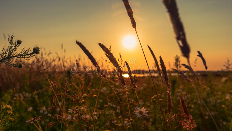 Stunning evening panorama of sunset in the field royalty free stock images
