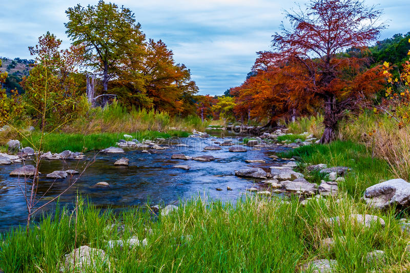 Rocky Crystal Clear Stream with Stunning Fall Cypr. Stunning Fall Colors of Texas Cypress Trees Surrounding the Crystal Clear Pedernales River in the Texas Hill royalty free stock photo