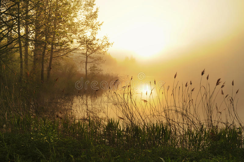 Stunning foggy landscape stock photo