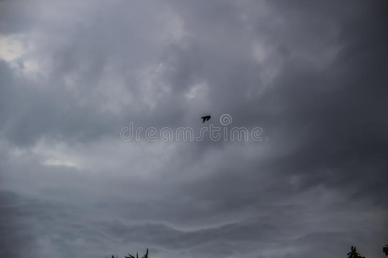 A stunning gray sky. A gray sky. Bird.The storm is approaching. A bird is flying. A stunning gray sky. A gray sky. The storm is approaching. A bird is flying stock photography