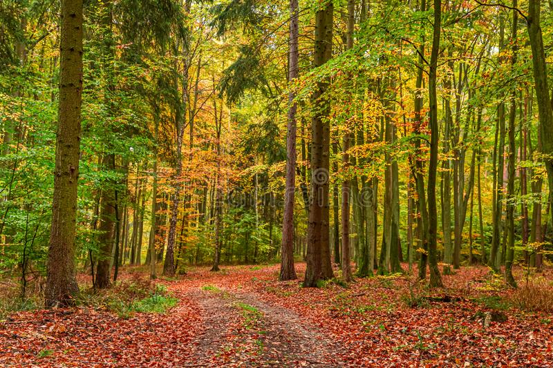 Stunning green and brown forest in the autumn, Poland royalty free stock photo