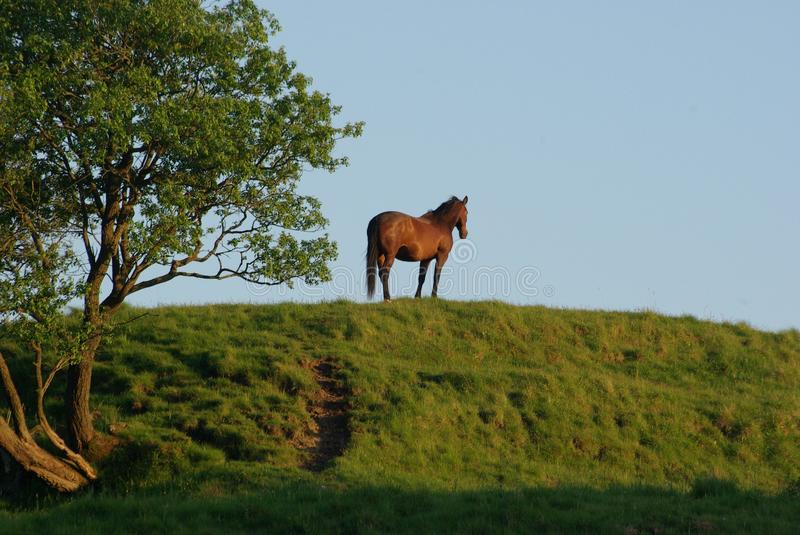 Stunning horse standing on a hill stock images