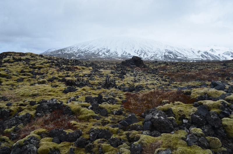Stunning Icelandic landscape of a lava field and snow capped mountain royalty free stock image