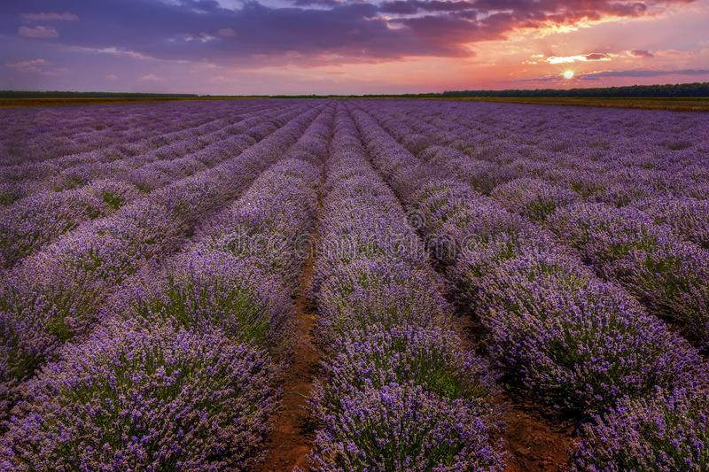 Stunning landscape. With lavender field at sunset royalty free stock photos