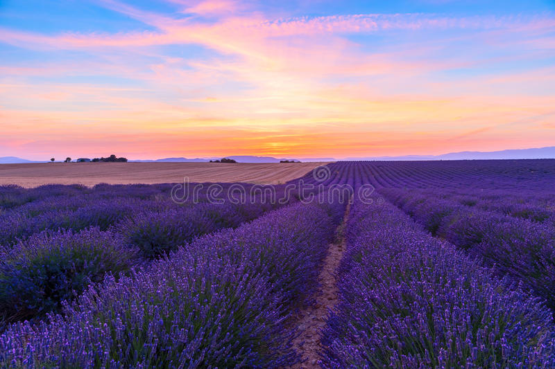 Stunning landscape with lavender field at sunset stock image