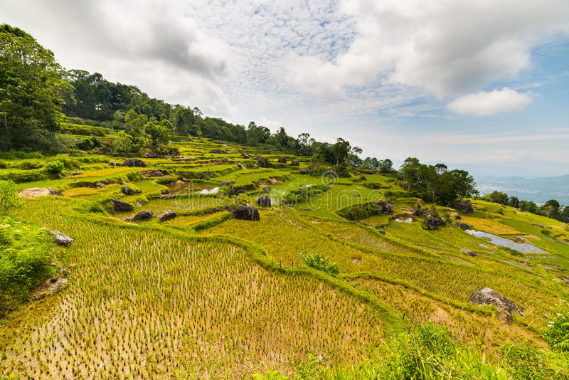 Stunning landscape of rice fields on the mountains of Batutumonga, Tana Toraja, South Sulawesi, Indonesia. Panoramic view from abo. Ve with soft early morning stock photography