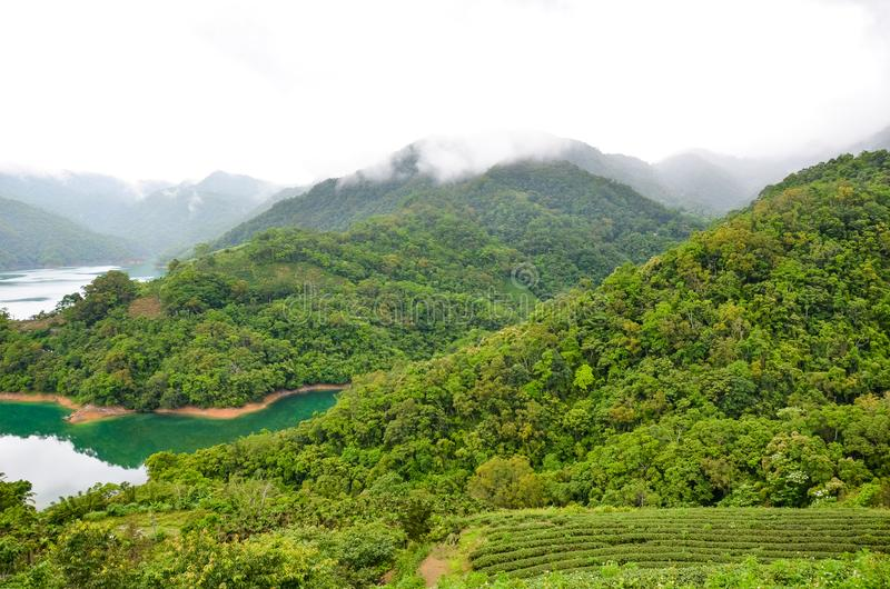 Stunning landscape by Thousand Island Lake with Pinglin Tea Plantation on a lake coast. Photographed in fog, moody weather. Tropical forest, tea plantations royalty free stock photography
