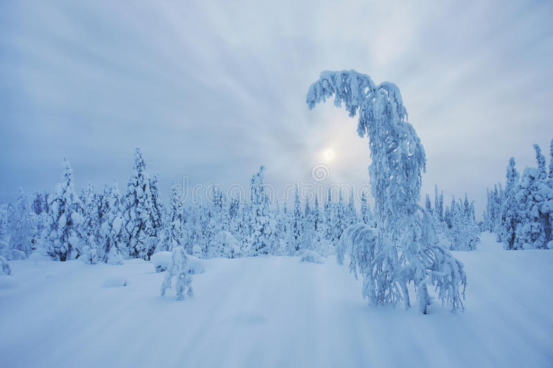 Stunning Lapland wilderness in winter royalty free stock image