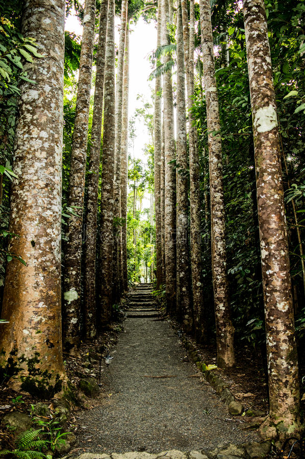 Stunning pathway in the north of Australia royalty free stock images