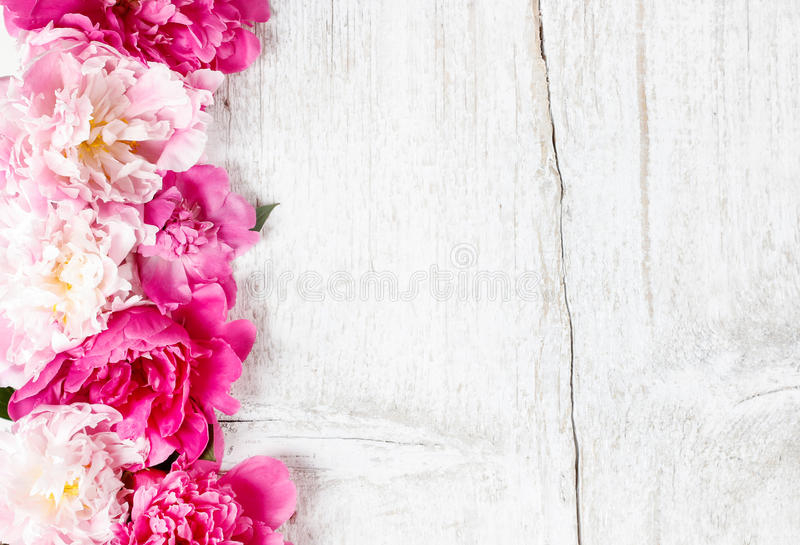 Stunning peonies on wooden background. Copy space royalty free stock image