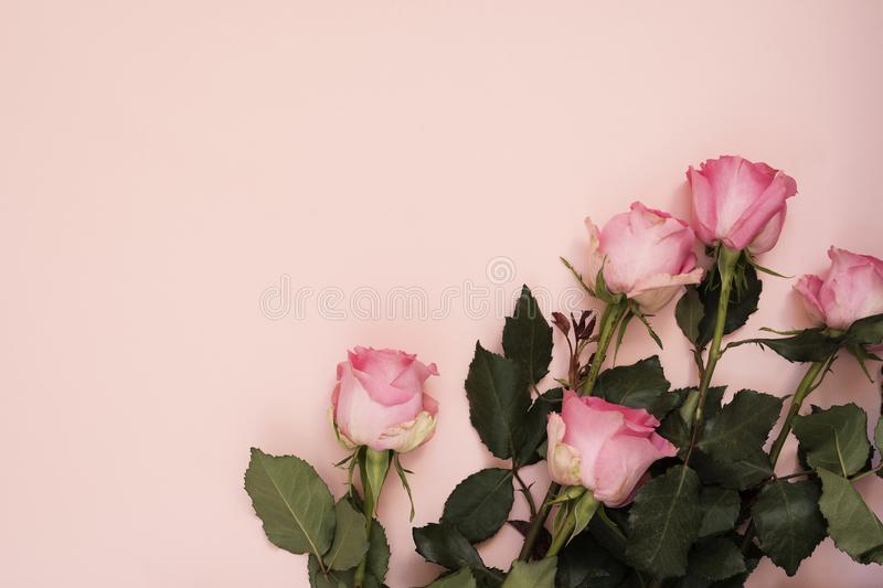 Stunning pink bouquet of roses on punchy pink background. Copy space, floral frame. Wedding, gift card, valentine`s day or mother. S day background royalty free stock photo