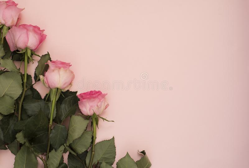Stunning pink bouquet of roses on punchy pink background. Copy space, floral frame. Wedding, gift card, valentine`s day or mother stock images