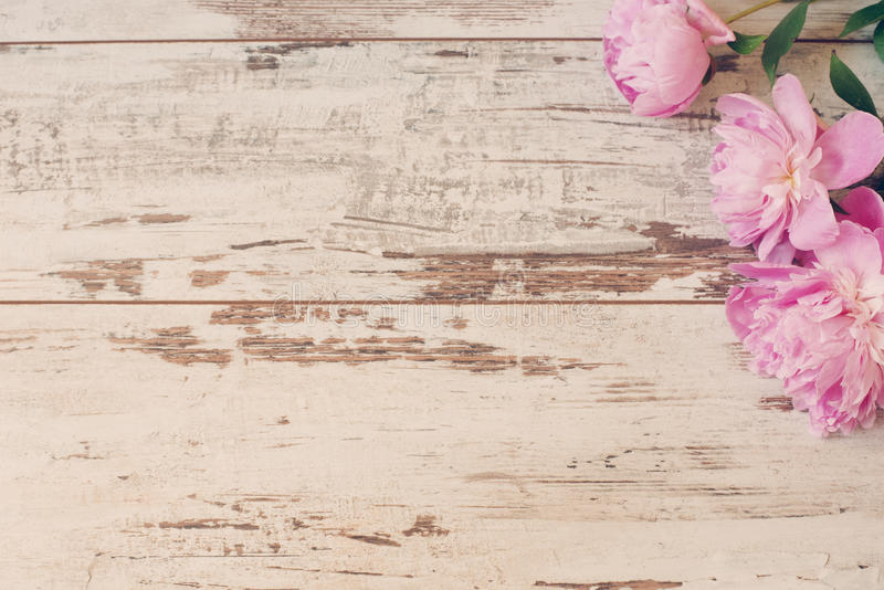 Stunning pink peonies on white light rustic wooden background. Copy space, floral frame. Vintage, haze looking. Wedding car royalty free stock photos