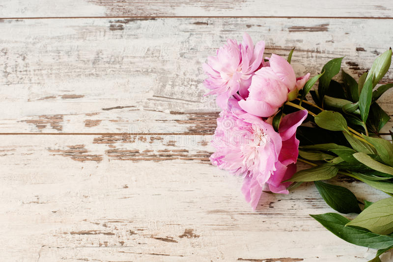 Stunning pink peonies on white light rustic wooden background. Copy space, floral frame. Vintage, haze looking. Wedding, gift card, valentine's day or mothers royalty free stock photography