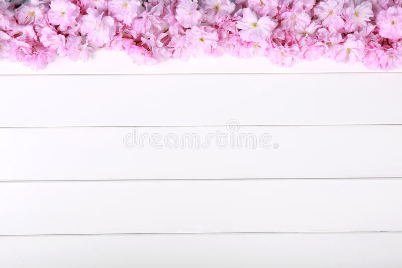 Stunning pink peonies on white rustic wooden background stock photography
