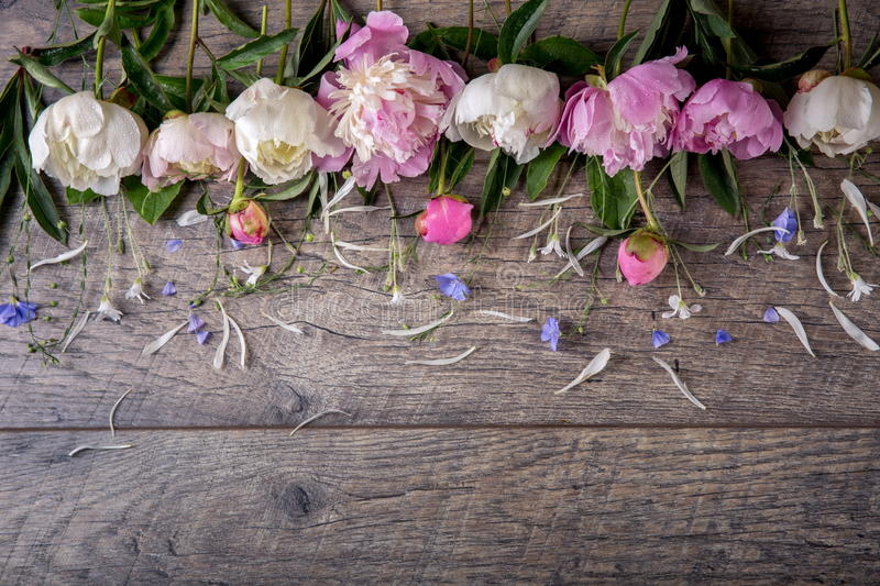 Stunning pink peonies on white rustic wooden background. Copy space stock photography