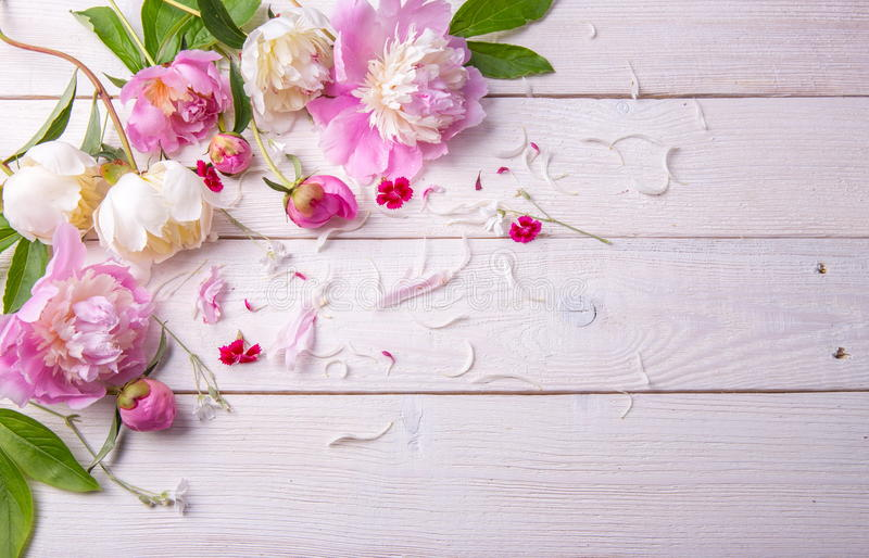 Stunning pink and white peonies on rustic wooden background. Copy space. Mother`s, Valentines, Women`s Wedding Day stock photography