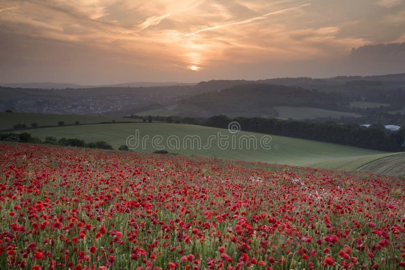 Stunning poppy field landscape under Summer sunset sky royalty free stock images