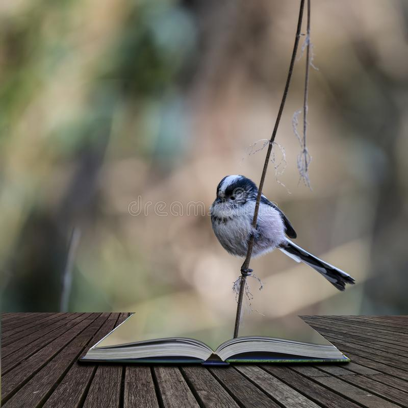 Stunning portrait of Long Tailed Tit Aegithalos Caudatus bird in sunshine in woodland setting coming out of pages of open story royalty free stock photo