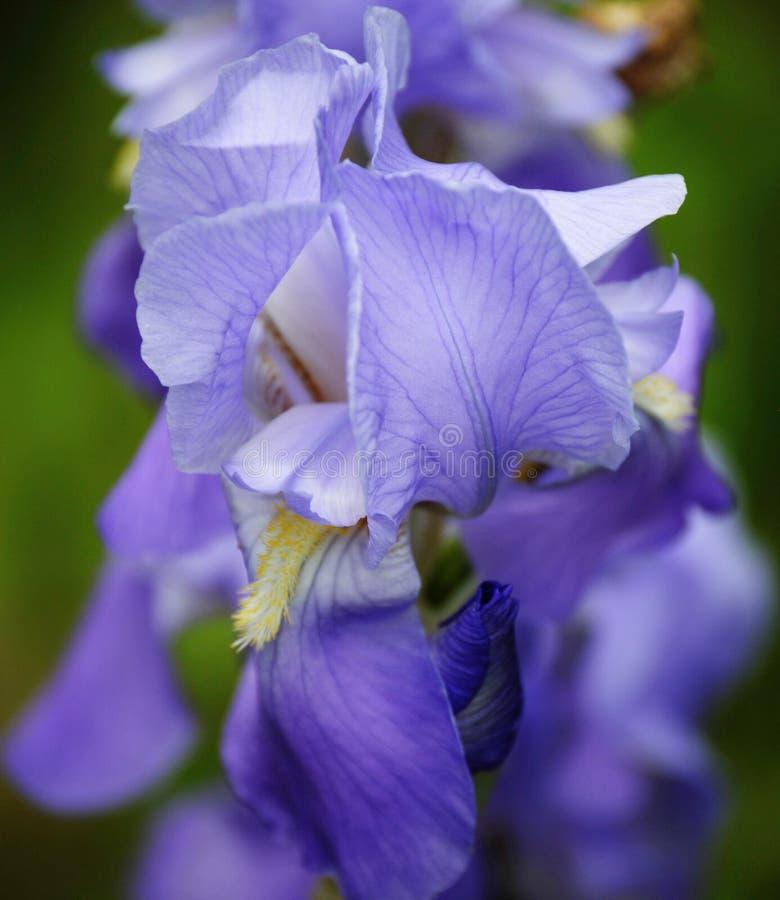Stunning Purple Flower Up Close. Found in North Carolina stock photos