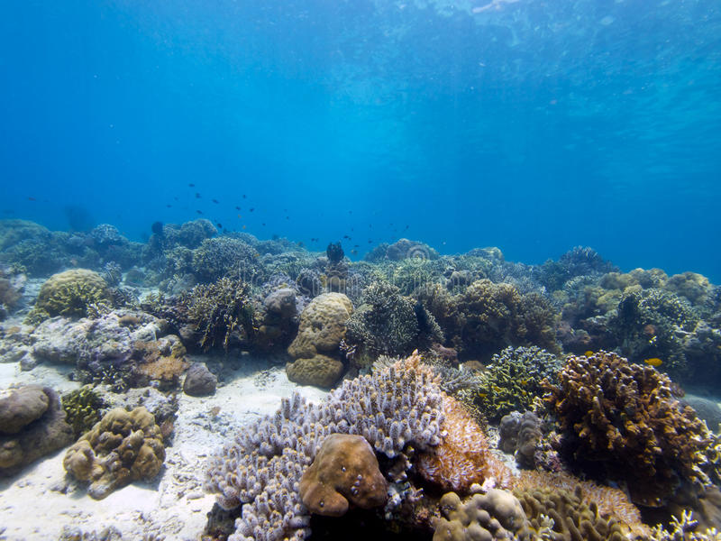 Stunning reef top at Menjangan Island 04. Its always great to see large areas of healthy hard and soft corals and that's exactly what you get on the walls and stock photography