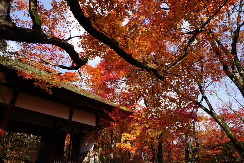 The Foliage at Jojjako-ji Temple stock photos