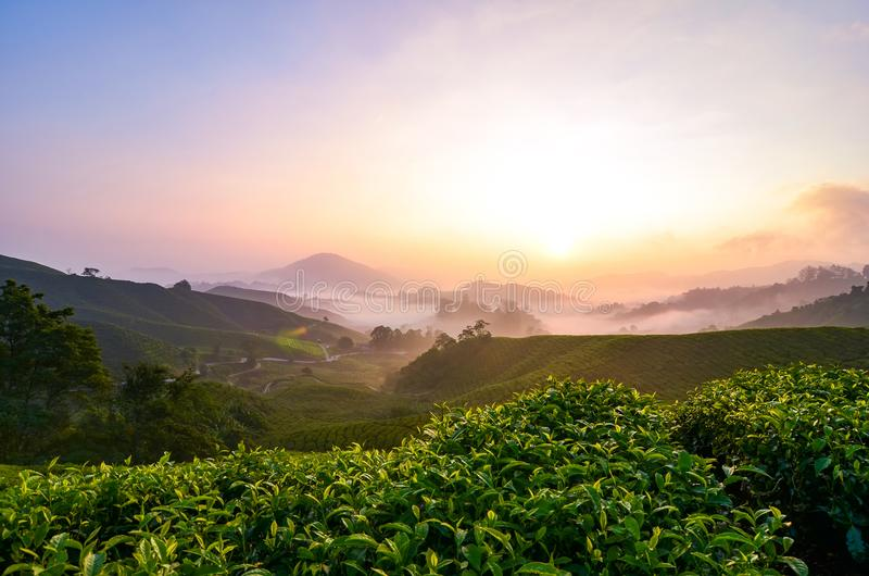 Stunning scenery of Cameron Highland sunrise located in Malaysia,. Popular with cold weather and tea plantation stock photo