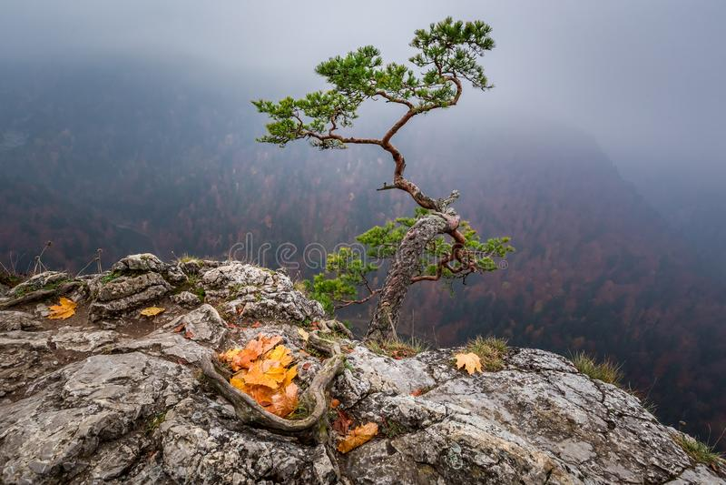 Stunning Sokolica peak in Pieniny mountains, Poland. Europe stock photography