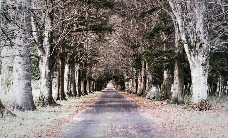 Stunning and spooky tree tunnel leading to a mansion in the woodlands stock photos