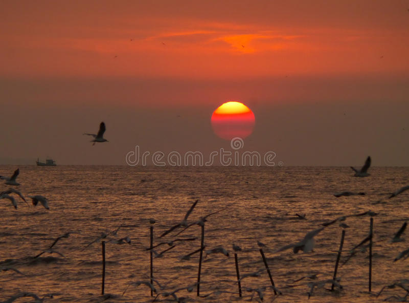 Stunning sunrise on gradation of red color sky with many flying seagulls stock images