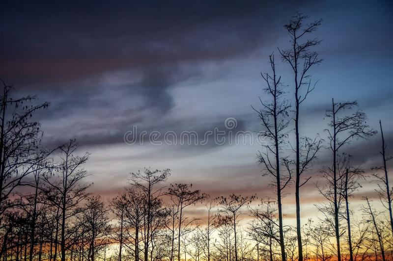 Stunning sunrise in the swamp royalty free stock photography