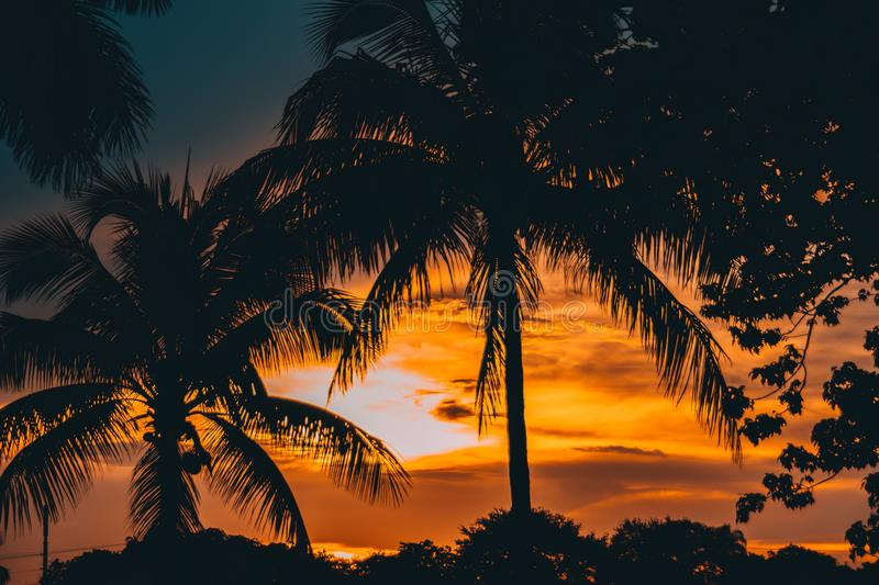 Stunning sunset in South Florida. Palms tree on sunset. Dramatic sky royalty free stock photos