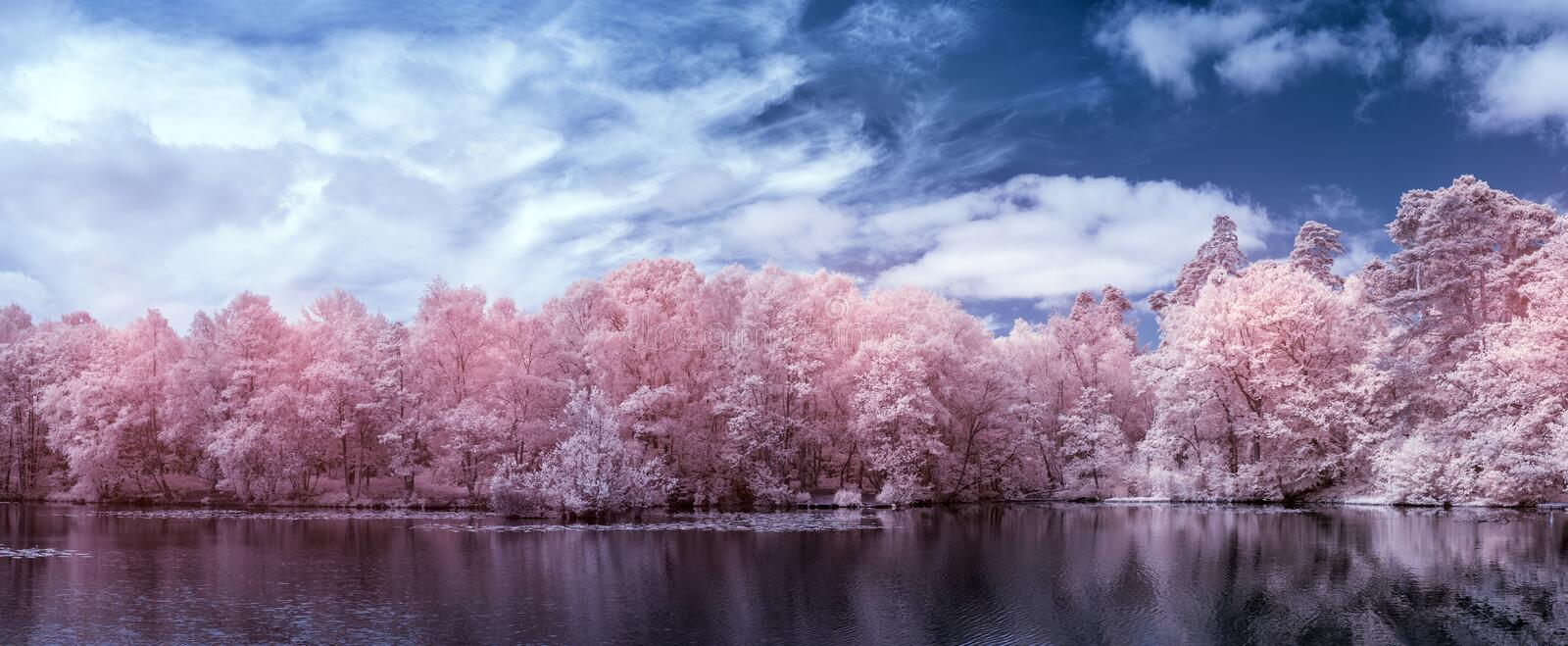 Stunning surreal false color infra red Summer landscape of lake and woodland in English countryside royalty free stock images