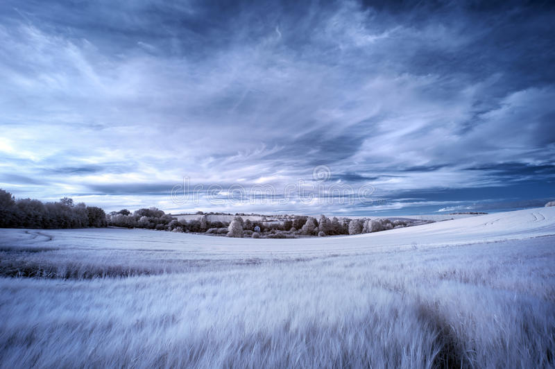 Stunning surreal false color infrared Summer landscape over agri royalty free stock photo