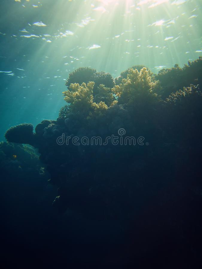 Stunning underwater photo of coral reefs from deep stock photo