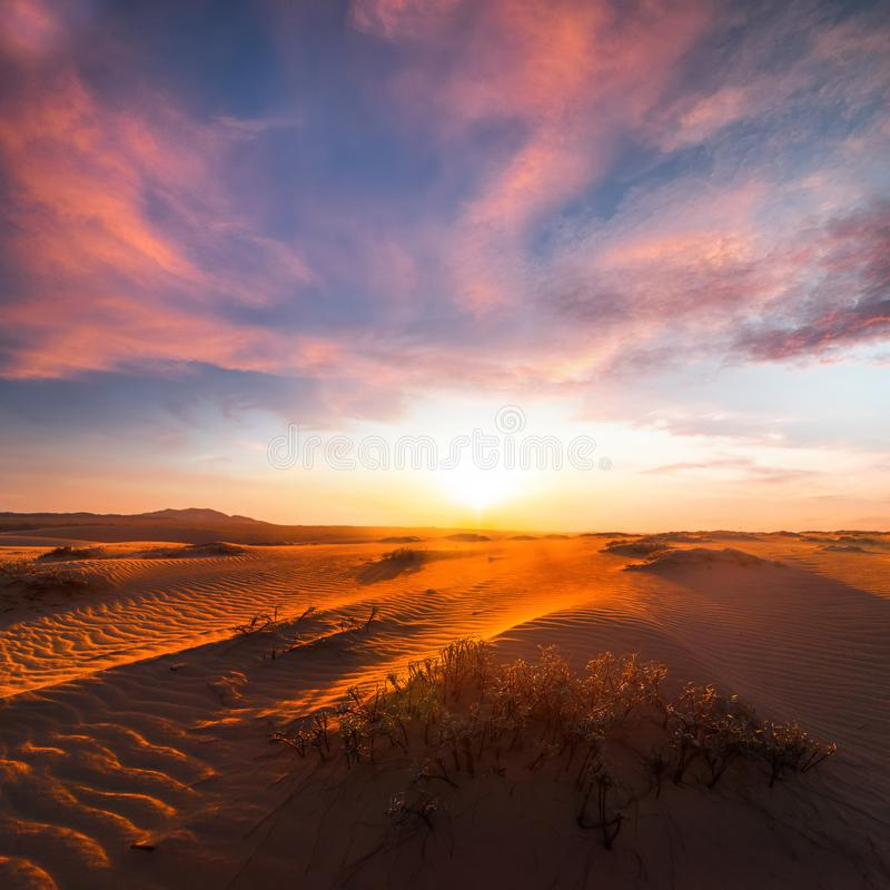 Stunning view of lonely sand dunes royalty free stock images