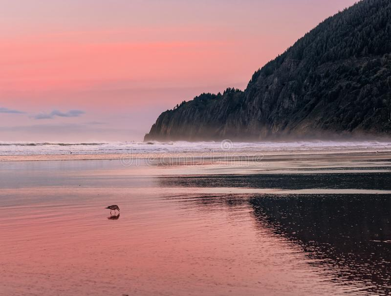 Stunning view of Manzanita Beach at dawn with a walking bird in the foreground royalty free stock images
