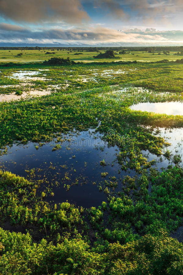 Stunning Wetland landscape in Pantanal located in Brazil.  royalty free stock photos