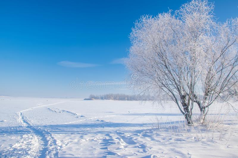 Stunning winter scenery with bare tree covered by frost on snowy meadow under blue sky stock photos