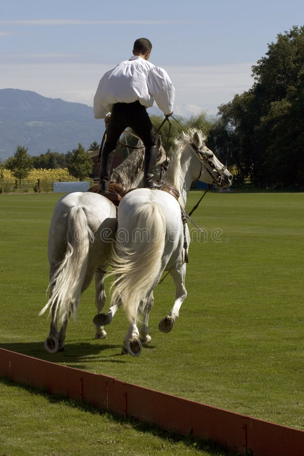 Download Stuntman on horses (3392) stock photo. Image of lawn, gallop - 1216040