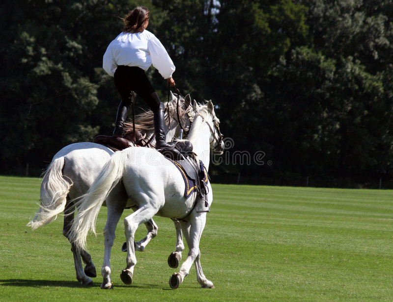 Stuntwoman on two horses stock image