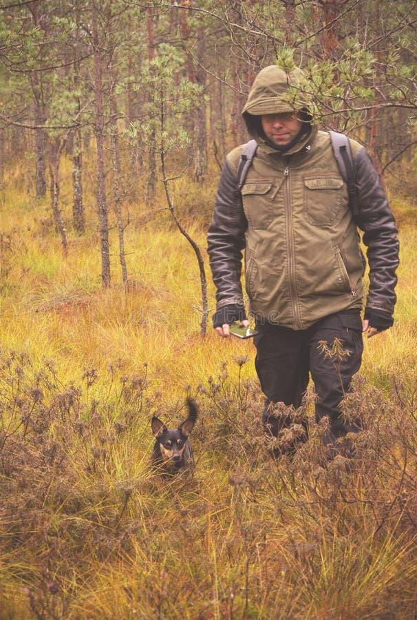 Stuoia e un cane nella palude di autunno fotografia stock