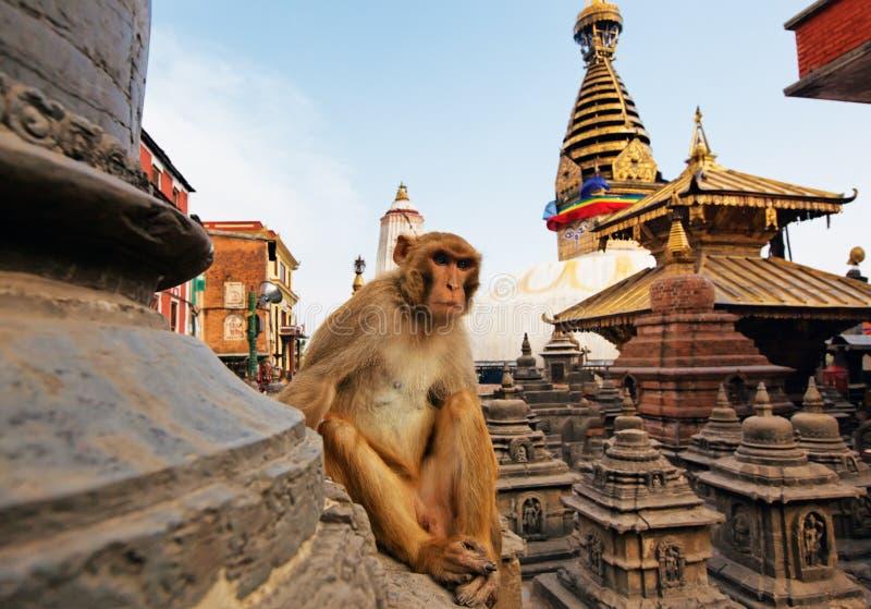stupa συνεδρίασης πιθήκων swayambhunath στοκ φωτογραφίες