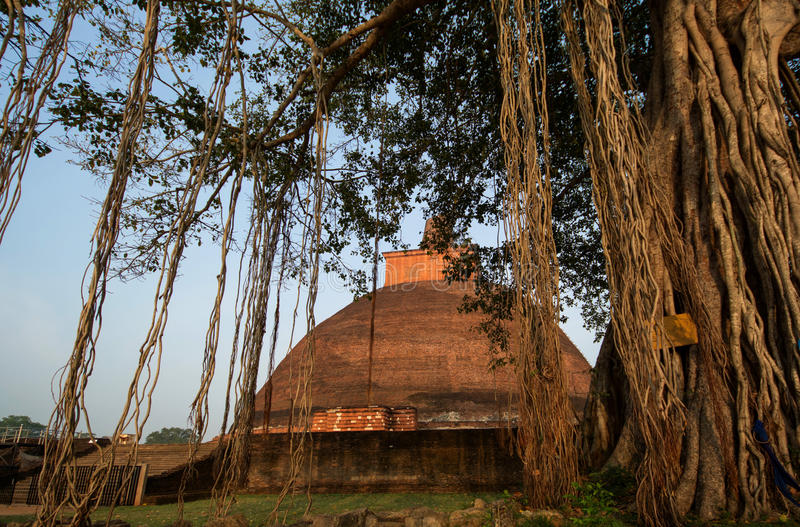 Stupa del dagoba de Jetavaranama, Anuradhapura, Sri Lanka foto de archivo libre de regalías