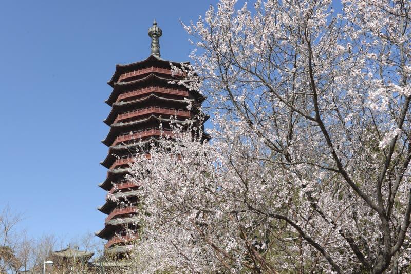 Stupa in parco cinese in primavera immagini stock