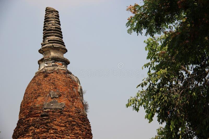 Stupa velho com folhas verdes fotos de stock